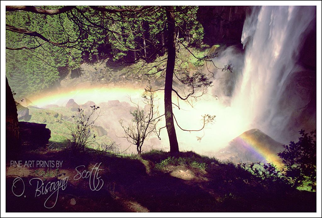 Rainbow Falls Tree