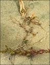 Seaweed Flower Driftwood