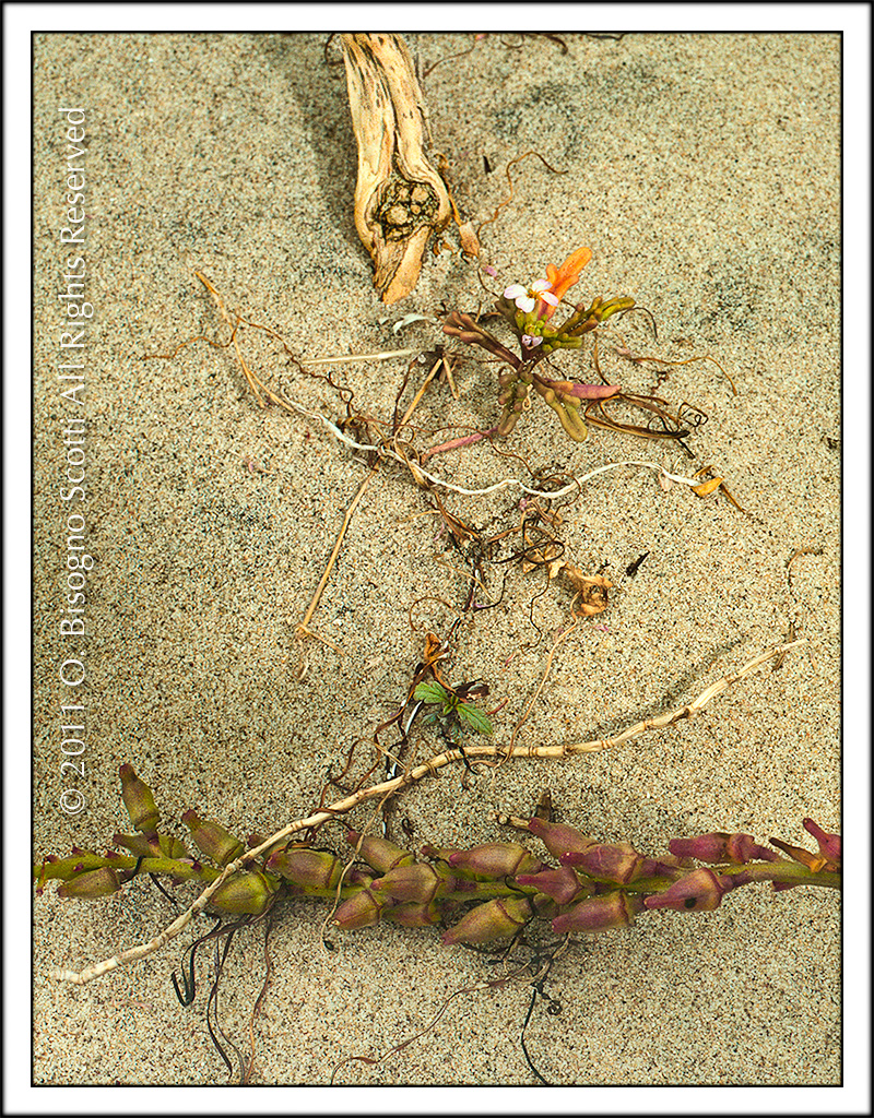 Flotsam and Flower