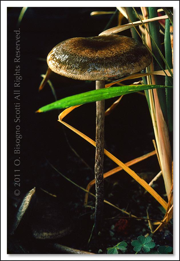 Mushroom in Greenhouse