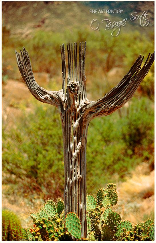 Crucifix Cactus