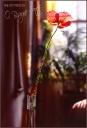 Poppy in the Livingroom