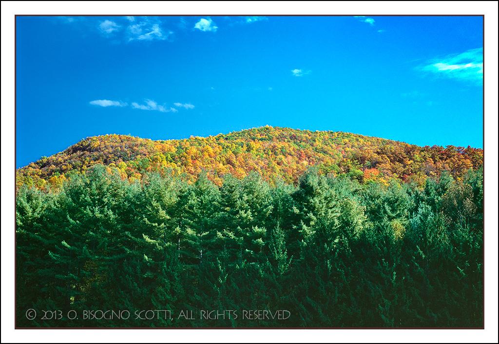 Evergreens in Autumn