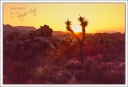Sunburst, Joshua Tree National Park
