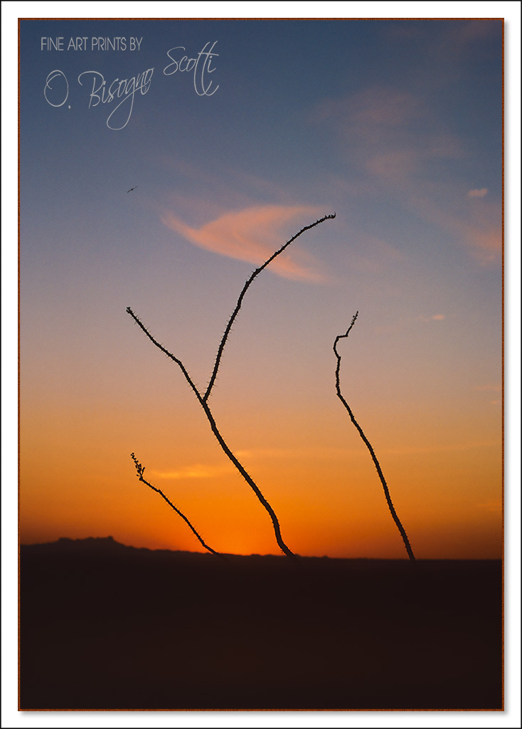 Tres Ocotillo - Arizona, USA
