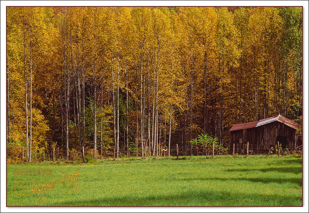 Shed in an Aspen Grove