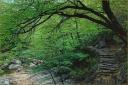 Seoraksan, Tree, Steps, Bridge