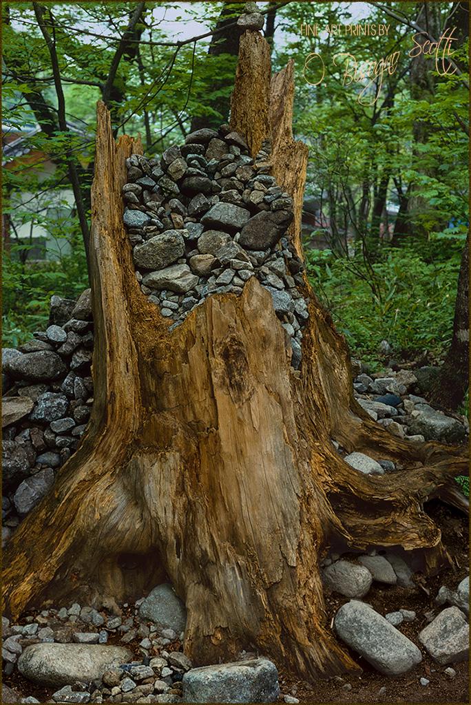 Trunk Full Of Rocks