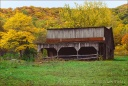 Barn and Yellow Tree