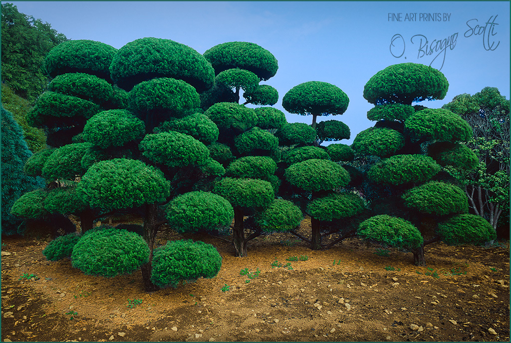 Pom Pom Topiary, South Korea