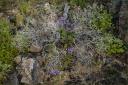 Gnarled Wood and Desert Flora
