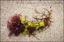 El Matador - Seaweed