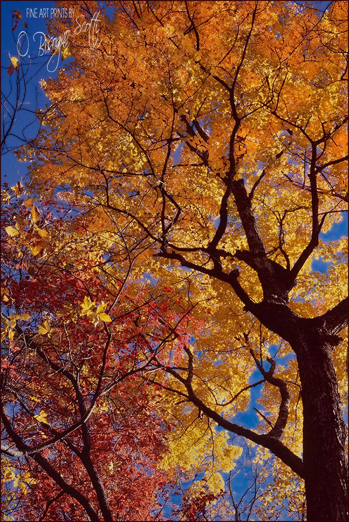 Autumn Tree, North Carolina