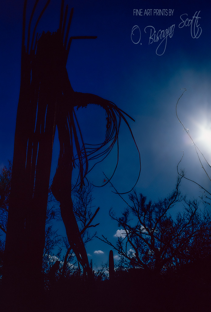 Sonoran Desert in Silhouette
