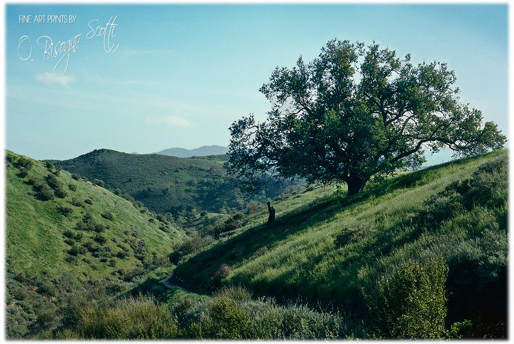 Cheeseboro Canyon Trail - Agoura, California