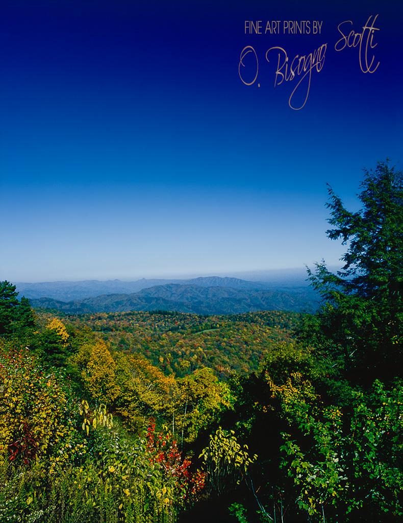 View Between Trees - Autumn North Carolina