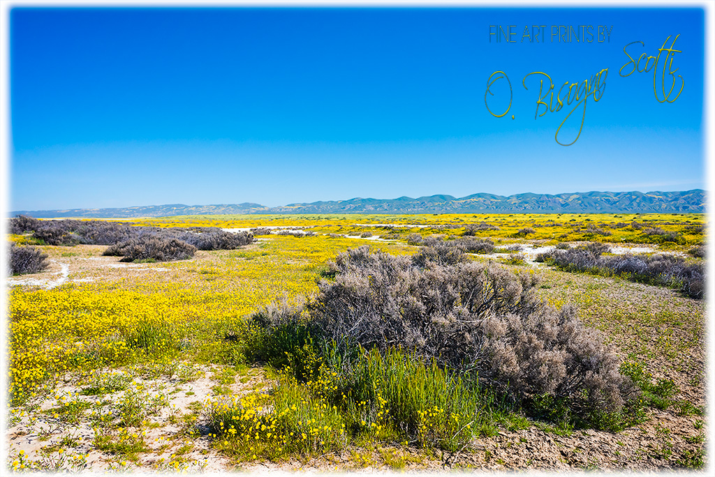 Yellow and Gray Plains Motif, Carrizo Plain NM, CA
