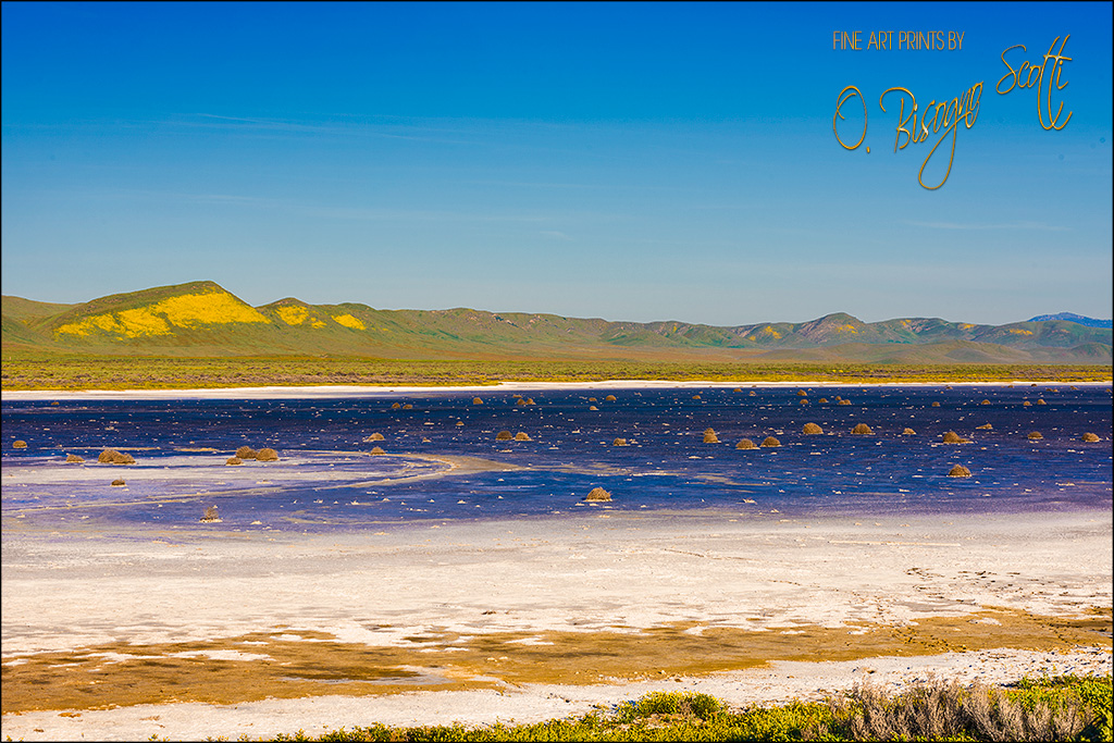Soda Lake in Spring-Carrizo Plain NM