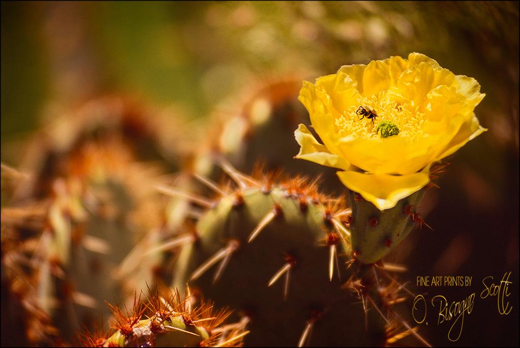 Bee Feast, Arizona