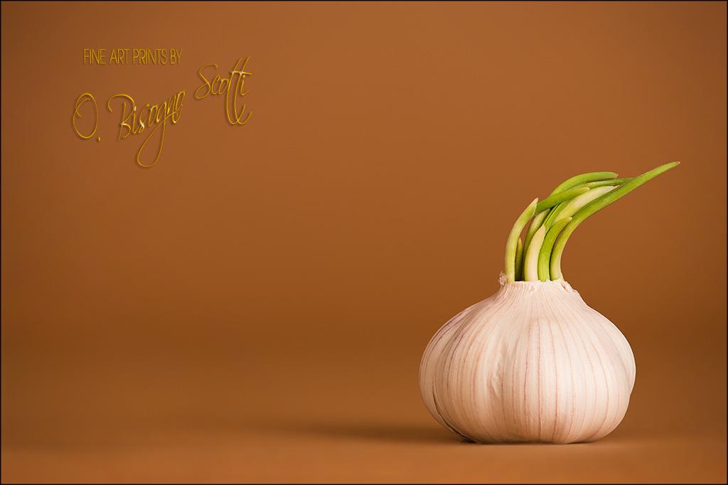 Garlic Knob
