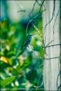 Hummingbird Contemplating a Tree