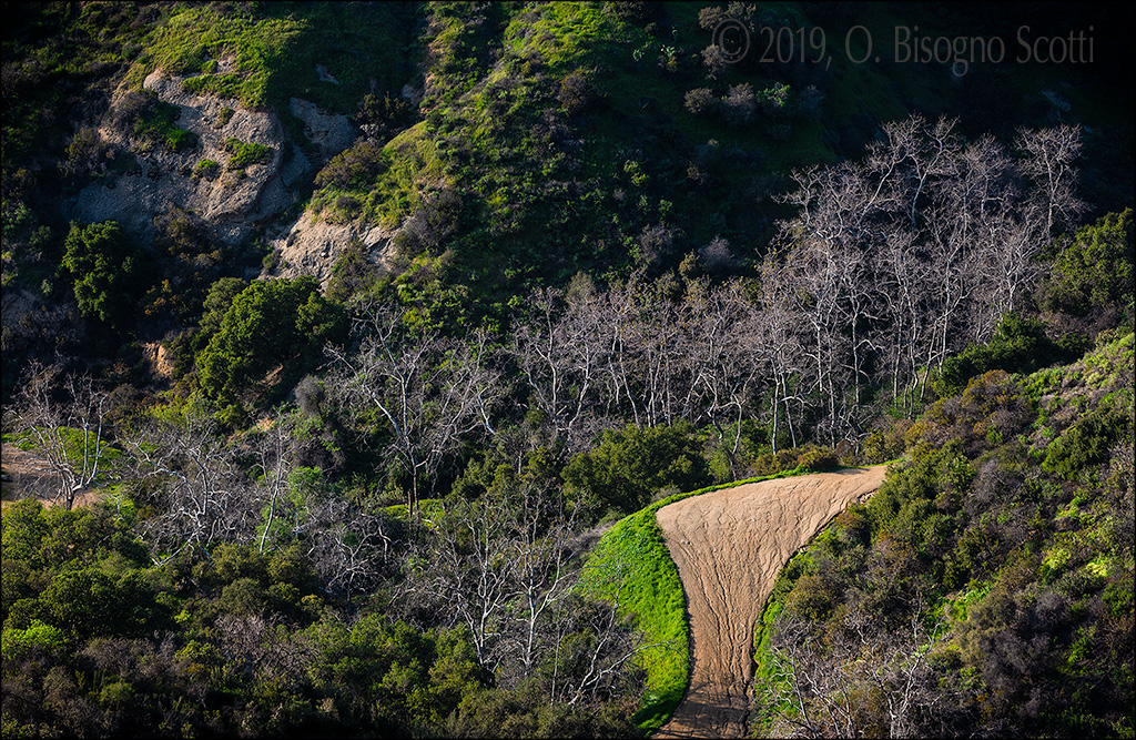 Silvery Trees - Griffith Park