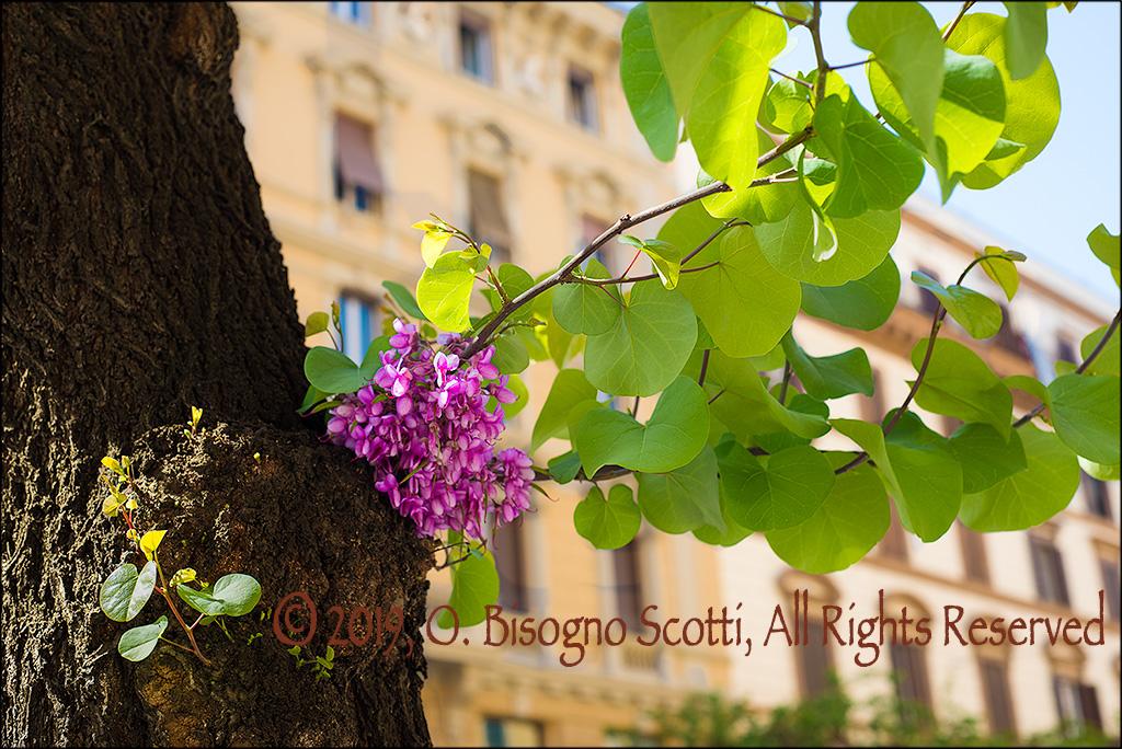 Tree in Roma